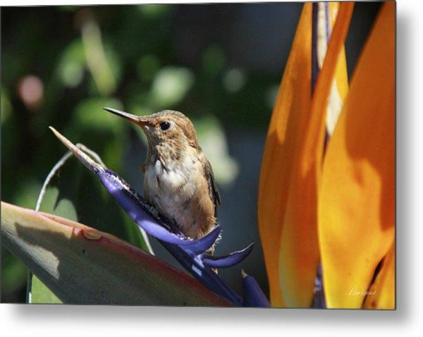 Baby Hummingbird On Flower Metal Print