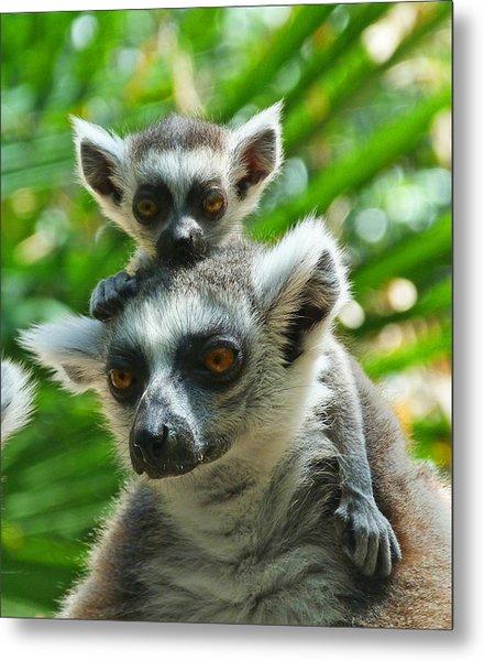Baby Lemur Views The World Metal Print