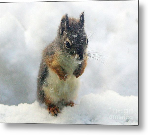 Baby Squirrel Metal Print