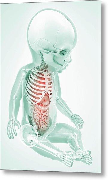 Baby's Anatomy Metal Print