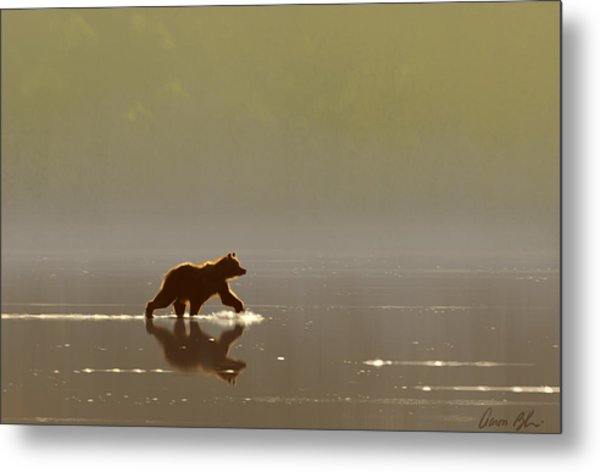 Back Lit Grizzly Metal Print