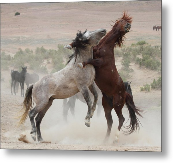 Back Off Metal Print by Gene Praag