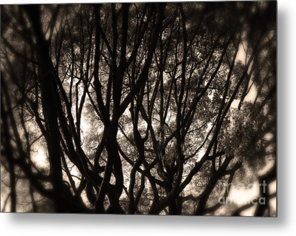 Backlit Branches Of A Majestic Tree II Metal Print
