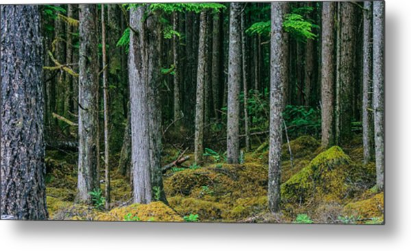 Inside View Backroad Forest Metal Print