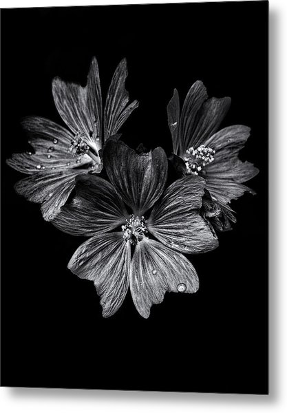 Backyard Flowers In Black And White 11 After The Storm Metal Print