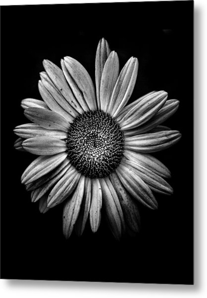 Backyard Flowers In Black And White 13 Metal Print