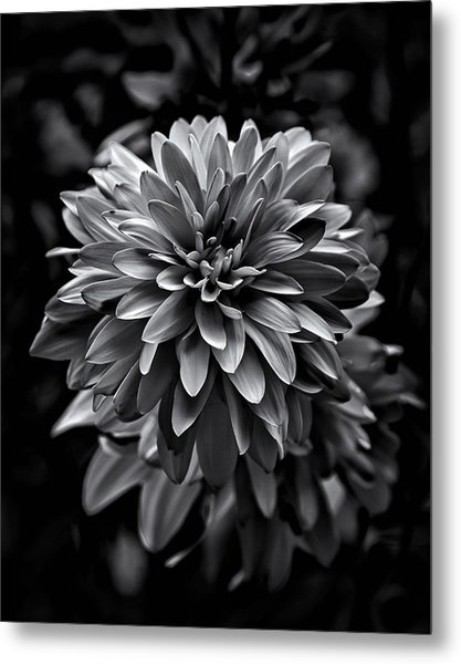 Backyard Flowers In Black And White 15 Metal Print