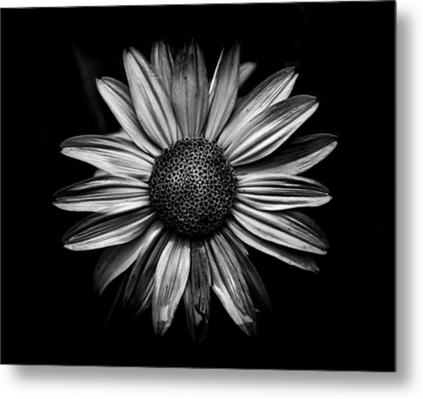 Metal Print featuring the photograph Backyard Flowers In Black And White 18 by Brian Carson