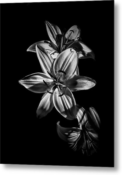 Backyard Flowers In Black And White 9 Metal Print