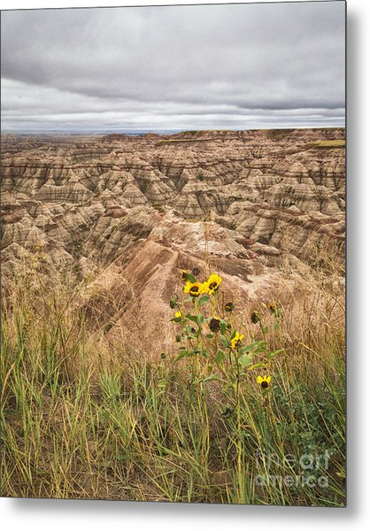 Badlands Wild Sunflowers Metal Print