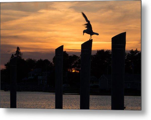 Balance - A Seagull Sunset Silhouette Metal Print