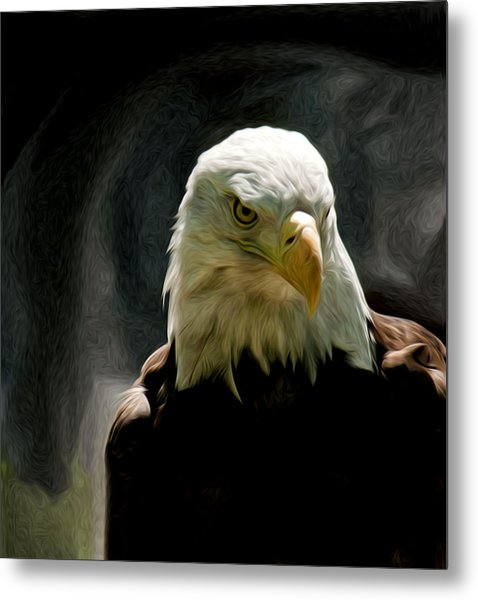 Bald Eagle Giving You That Eye Metal Print