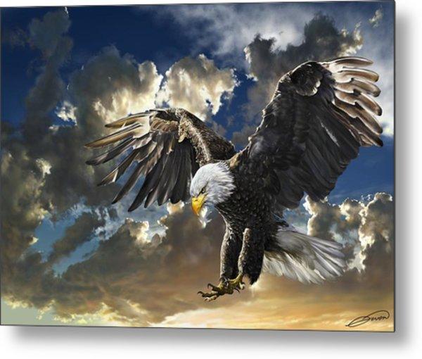 Bald Eagle Haliaeetus Leucocephalus Metal Print by Owen Bell