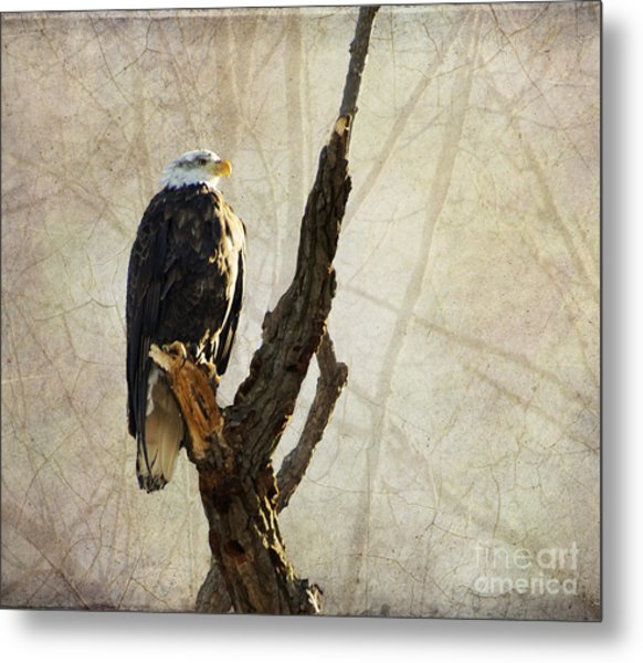 Bald Eagle Keeping Watch In Illinois Metal Print