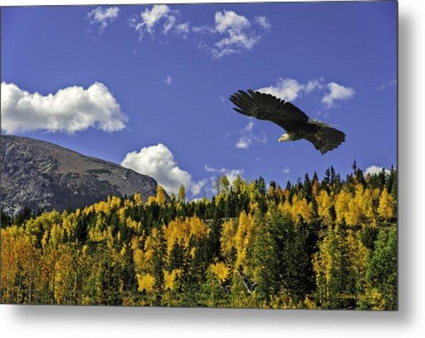 Bald Eagle Over The Aspen Metal Print