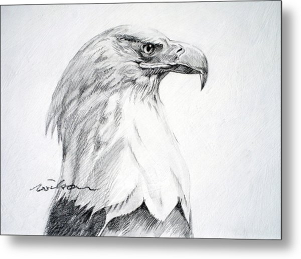 Bald Eagle Metal Print by Ron Wilson