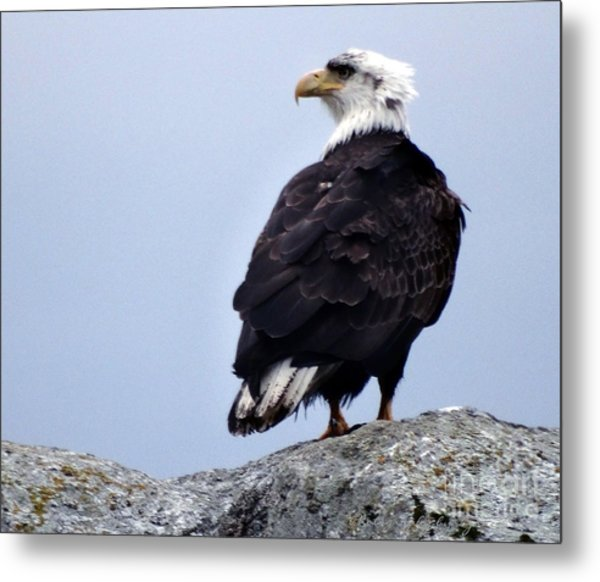 Bald Eagle Watching Metal Print
