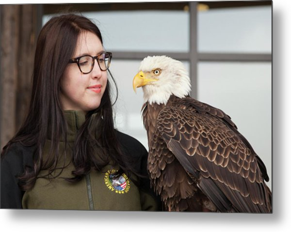 Bald Eagle With Handler Metal Print by Jim West