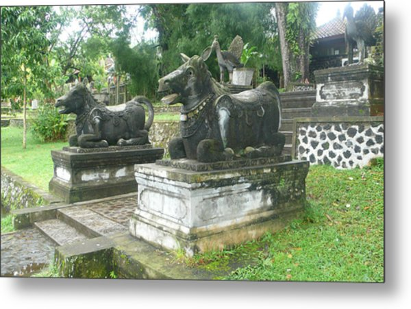 Bali Bulls Metal Print by Jack Edson Adams