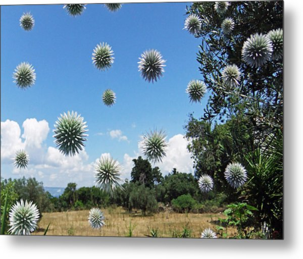 Metal Print featuring the pyrography Balls by Eric Kempson