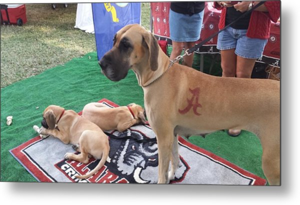 Bama Great Dane Metal Print