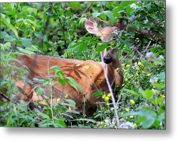 Metal Print featuring the photograph Bambi by David Armstrong