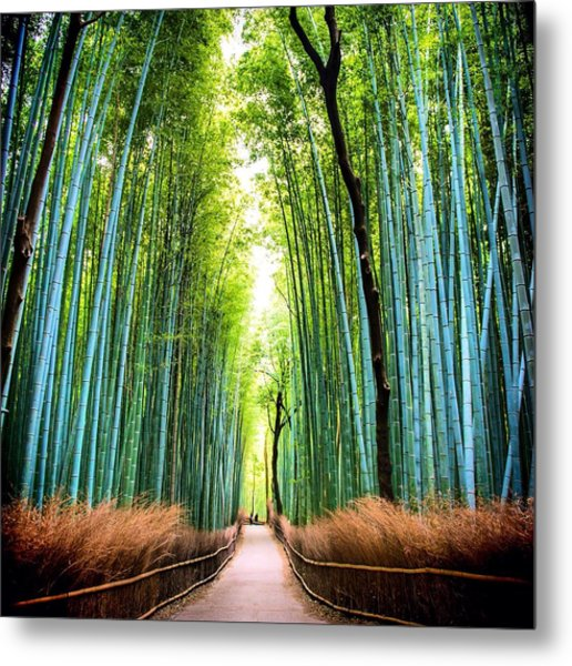 Bamboo Forest Metal Print by James Kang / Eyeem