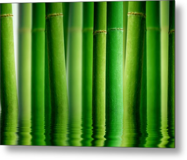 Bamboo Forest With Water Reflection Metal Print