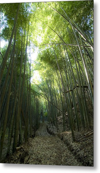 Bamboo Road Metal Print by Aaron Bedell