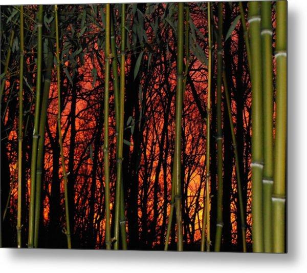 Bamboo Sunset Metal Print by Sharon Costa