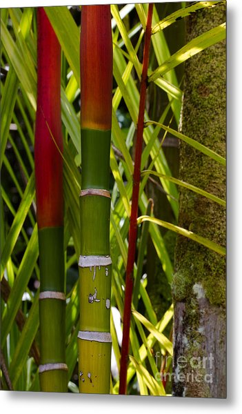 Bamboo Too All Profits Go To Hospice Of The Calumet Area Metal Print