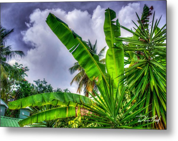 Banana Fan Metal Print by William Reek