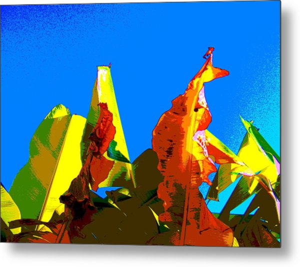 Banana Skies Metal Print by Rebecca Flaig