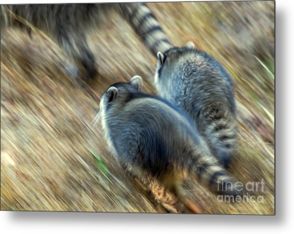 Bandits On The Run Metal Print