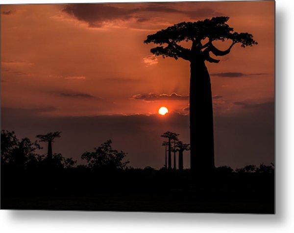Baobab Sunrise Metal Print