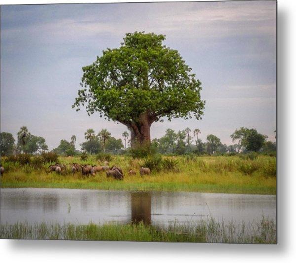 Baobao Tree Metal Print
