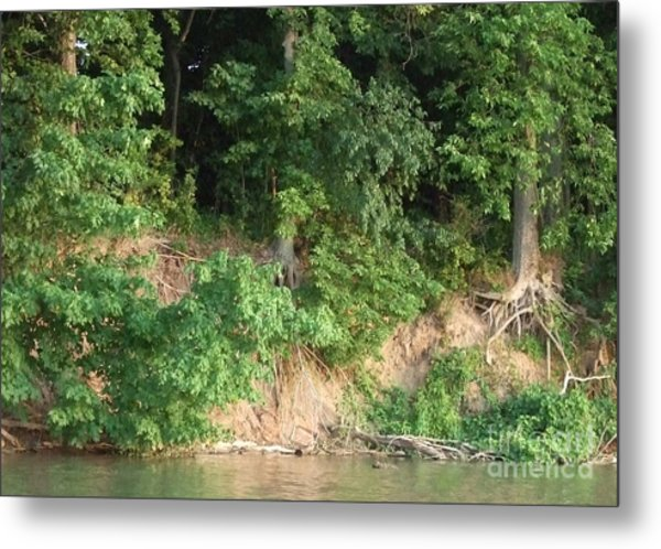 Bare Roots Metal Print