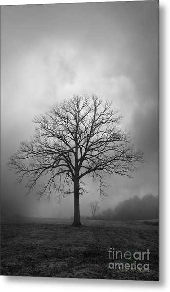 Bare Tree And Clouds Bw Metal Print