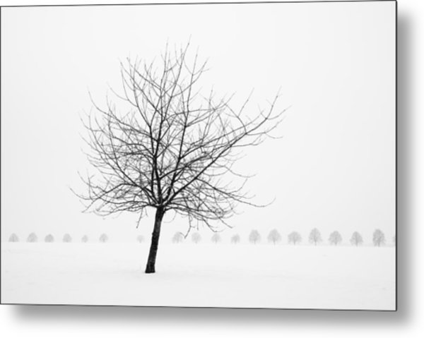 Bare Tree In Winter - Wonderful Black And White Snow Scenery Metal Print