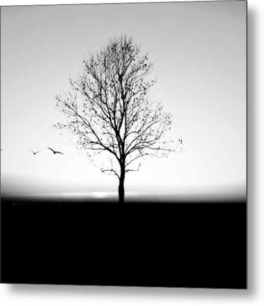 Bare Tree On Silhouette Field Against Metal Print by Marc Stapel / Eyeem