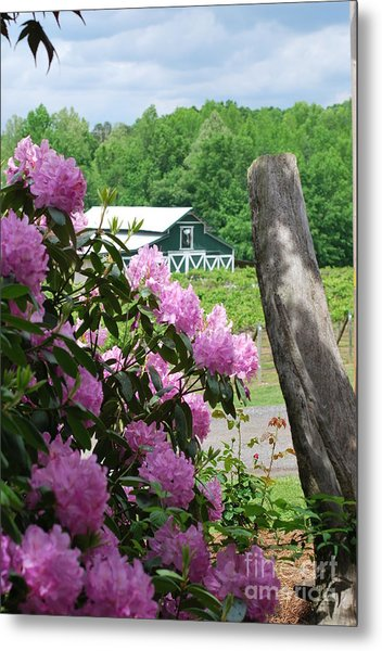 Barn And Blossoms Metal Print by Gayle Melges