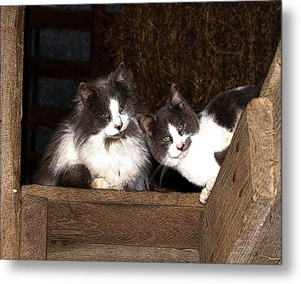 Barn Cats Metal Print