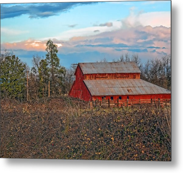 Barn In The Berry Bushes Metal Print