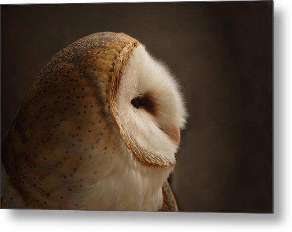 Barn Owl 3 Metal Print