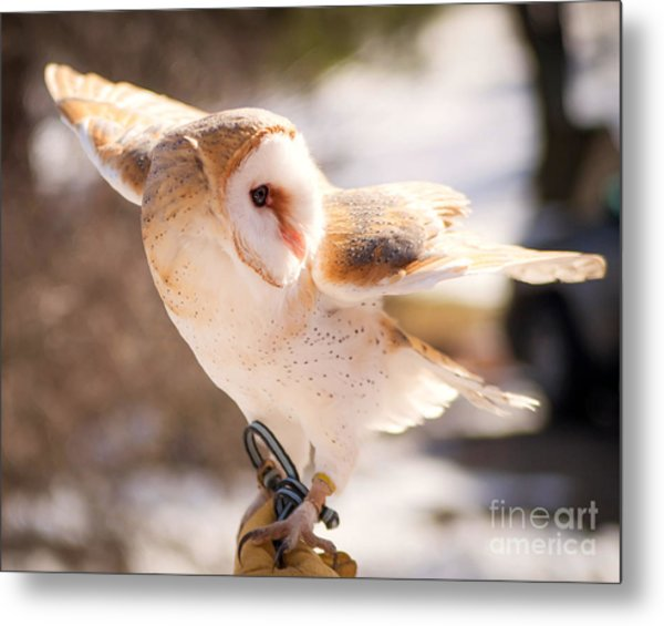 Barn Owl In The Breeze Metal Print