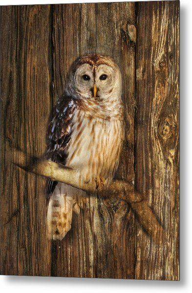 Barred Owl 1 Metal Print