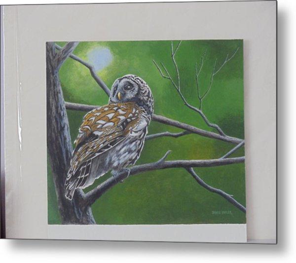 Barred Owl Metal Print by James Lawler