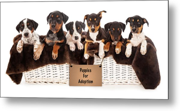 Basket Of Mixed Breed Puppies Metal Print