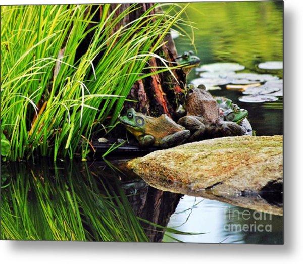 Basking Bullfrogs Metal Print