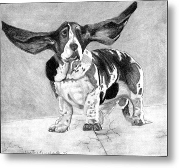 Basset Artesien Normand Dog Portrait Metal Print by Olde Time  Mercantile